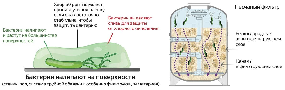 Водоподготовка для бассейнов - бактерии создают биопленку, через которую не может проникнуть хлор