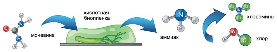 Водоподготовка бассейнов, находящиеся под биопленкой бактерии создают в фильтре очень кислотную среду, что способствует образованию трихлораминов.